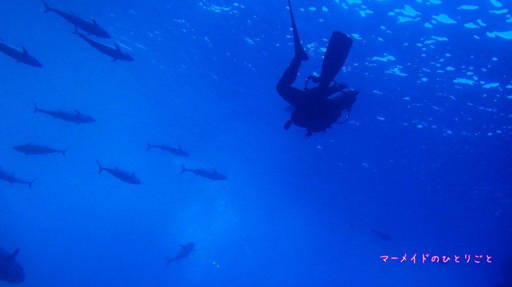 ダイビング スキルアップ フィンキック