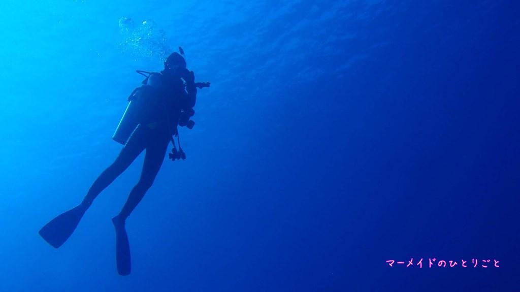 ダイビング 中性浮力 スキルアップ