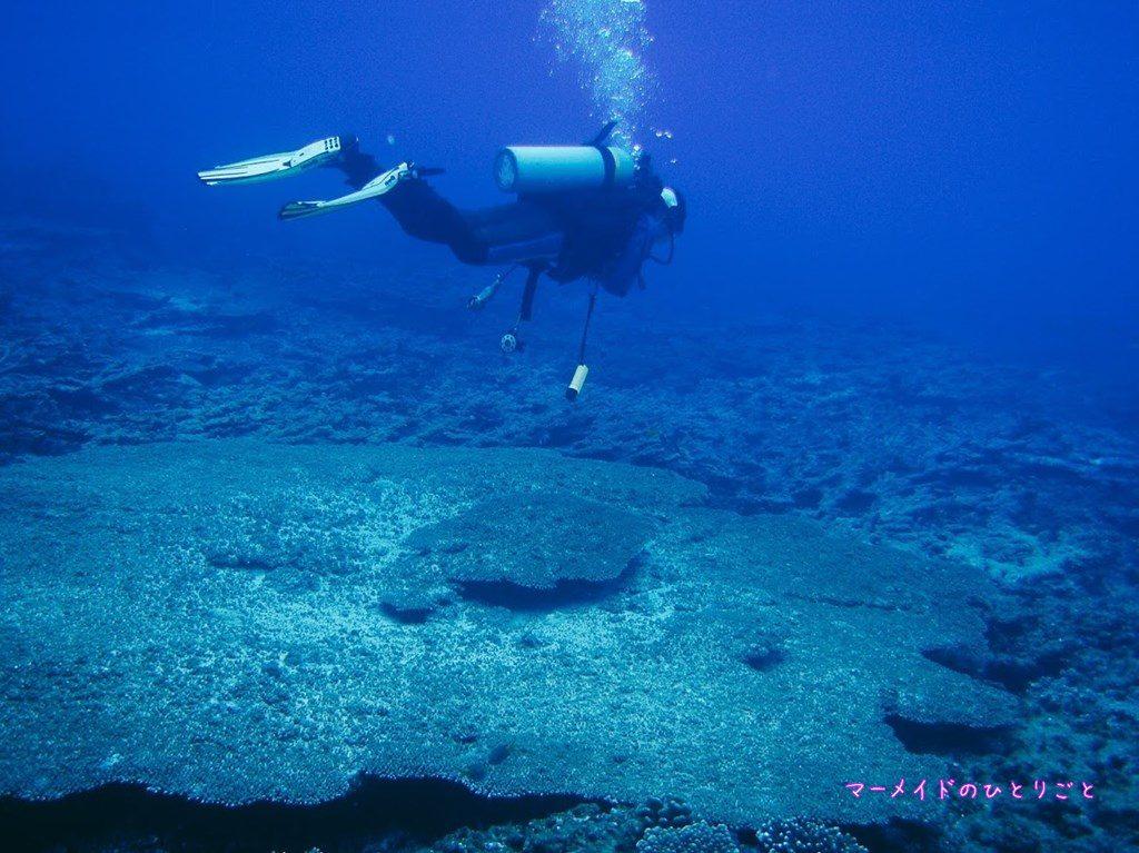 ダイビング スキルアップ 中性浮力