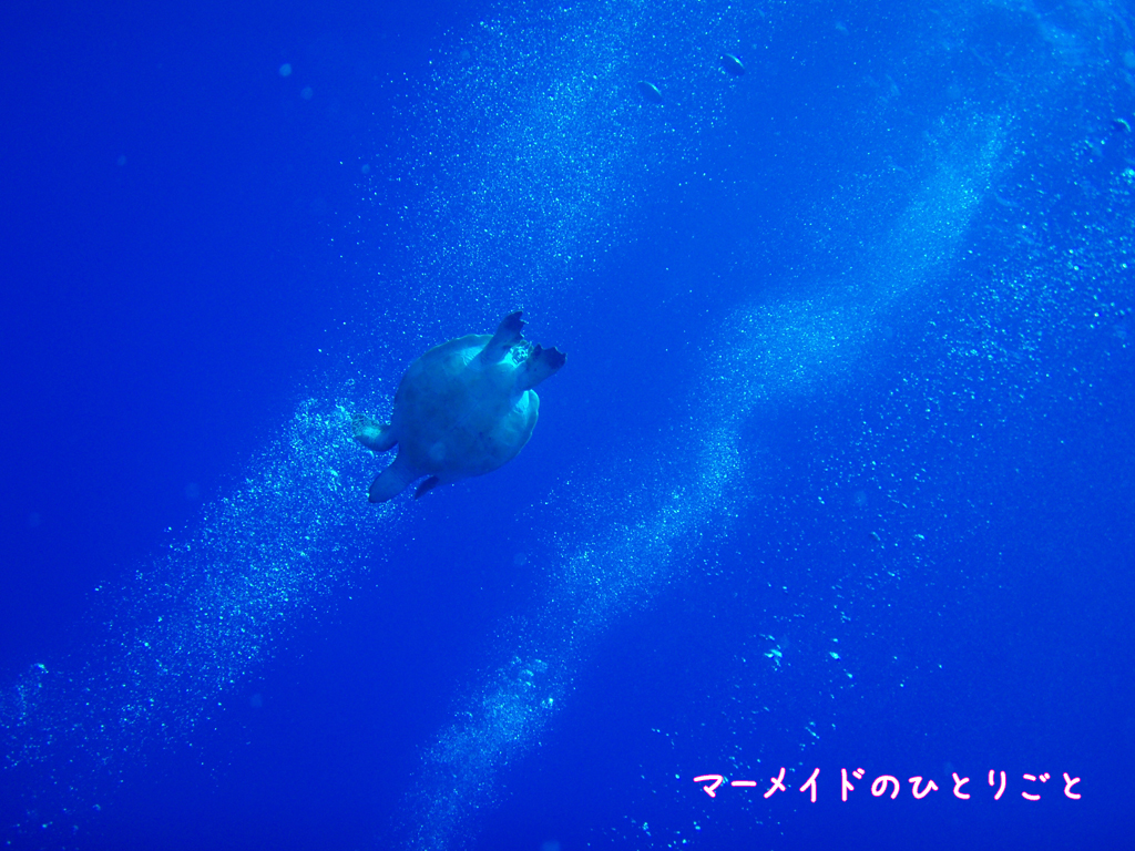 ダイビング スキルアップ ドリフトダイビング アオウミガメ