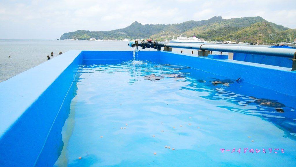 小笠原海洋センター アオウミガメ