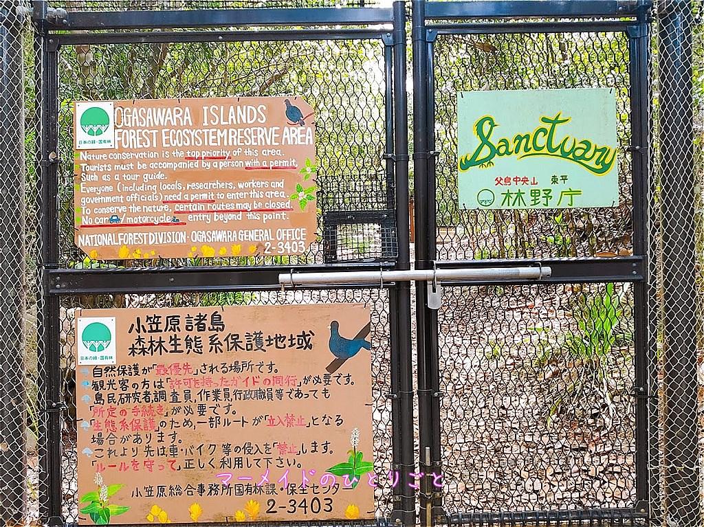 東平サンクチュアリ 小笠原 森林生態系保護地域